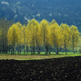 Trees  And  Field Languedoc France Photographic Print by Green Light Collection