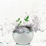 Crystal Sphere with Water Drops And Green Leaves Splashing on White Background Photographic Print by Green Light Collection