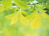 Selective Focus Close Up of Green Leaves Hanging From Tree Photographic Print by Green Light Collection