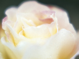 Close-up of a Flower Photographic Print by Green Light Collection