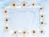 White Daisy Flowers on Textured Background Photographic Print by Green Light Collection