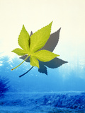 Single Oak Leaf Floating in Front of Mountains And Stream, Photographic Print by Green Light Collection