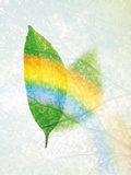 Leaves And Rainbow on Texture of Tree Branches Photographic Print by Green Light Collection