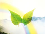 Two Leaves with Rainbow And Foggy Mountains in Background Photographic Print by Green Light Collection