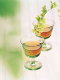 Glass of Tea And Leaves Photographic Print by Green Light Collection