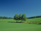 Trees in Field Hokkaido Japan Photographic Print by Green Light Collection