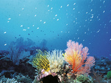 Coral Reef And School of Fish, Undersea View Photographic Print by Green Light Collection
