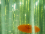 Bamboo Kyoto Japan Photographic Print by Green Light Collection