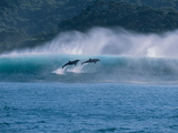 Common Dolphins Breaching in the Sea Fotografisk trykk av Green Light Collection