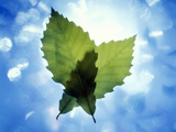 Two Leaves Crossed Back Lit by Bright White Light And Blue Sky And Clouds Photographic Print by Green Light Collection