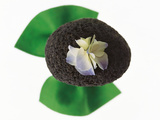 Flower on Rock Photographic Print by Green Light Collection