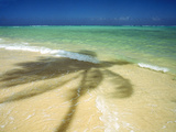 Shadow of Palm Tree on the Beach Photographic Print by Green Light Collection