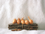 Bunch of Dry Twigs with Onions in a Row Against White Textured Wall Photographic Print by Green Light Collection