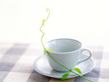 Cup Plate And Leafy Branch on Table Top Photographic Print by Green Light Collection