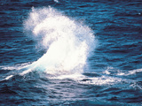 Wave Splash Photographic Print by Green Light Collection