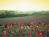 Beautiful View of Sunny Morning in Field with Red Wildflowers Stampa fotografica di Green Light Collection
