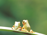 Pair of Frogs Sitting on Green Leaf Photographic Print by Green Light Collection