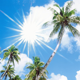Palm Trees Against Sky with Sun Shining Photographic Print by Green Light Collection