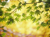 Leaves on a Branch Photographie par Green Light Collection