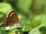 Butterfly Perching on a Leaf Photographic Print by Green Light Collection