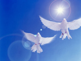 Two Doves Side by Side with Wings Outstretched in Flight with Brilliant Light And Blue Sky Reproduction photographique par Green Light Collection