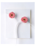 Two Vivid Pink Gerbera Daisy Blooms on White Stems with White Background Photographic Print by Green Light Collection