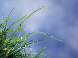 Dew Drops on Grass Blades Photographic Print by Green Light Collection