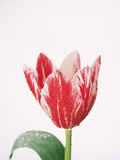 Close Up of Pink Flower with Dew Drops Photographic Print by Green Light Collection