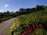 Herbaceous Border in the Victorian Walled Garden, Kylemore Abbey Photographic Print by Green Light Collection