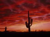 Organ Pipe Cactus State Park AZ USA Fotografisk trykk av Green Light Collection