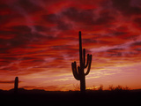 Organ Pipe Cactus State Park AZ USA Fotografie-Druck von Green Light Collection