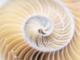 Close Up of Shell Photographic Print by Green Light Collection