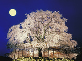Trees Park Maruyama Kyoto Photographic Print by Green Light Collection