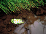 Flowers on Leaf Boat Floating on Water Photographic Print by Green Light Collection