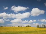Mustard Fields, Smiltene, Vidzeme Region, Latvia Photographic Print by Green Light Collection