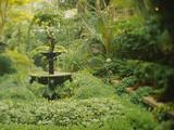 Fountain in a Garden, Secret Garden, Savannah, Georgia, USA Photographic Print by Green Light Collection