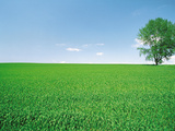 Crop Field And Single Tree Against Sky Photographic Print by Green Light Collection