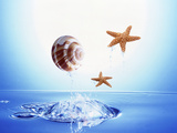 A Shell And Two Starfish Floating Above Bubbling Water Photographic Print by Green Light Collection