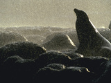Sealion Galapagos Is Ecuador Photographic Print by Green Light Collection