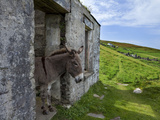 Donkey in Deserted Cottages on Great Blasket Island Photographic Print by Green Light Collection