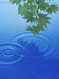 Branch with Green Leaves Suspended Over Deep Blue Water with Rings And Reflection Papier Photo par Green Light Collection