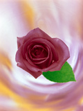 Close Up of Red Rose with Green Leaf Floating in Front of Swirling Pinks Photographic Print by Green Light Collection
