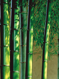 Bamboos in Forest Photographic Print by Green Light Collection