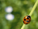 Ladybug on a Stem Photographic Print by Green Light Collection