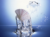 White Scallop Shell Being Raised on Pillar of Bubbling Water Photographic Print by Green Light Collection