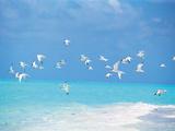 Flock of Birds Migrating Over Seascape 写真プリント : グリーン・ライト・コレクション