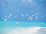 Flock of Birds Migrating Over Seascape Fotoprint av Green Light Collection