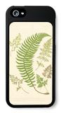 Ferns with Platemark IV iPhone 5 Case