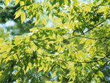 Close-up of Leaves on Branches Photographic Print by Green Light Collection