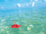 Flower Floating on Water Photographic Print by Green Light Collection